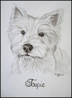 Bonjour à tous ! Le portrait miniature de Toupie est terminé ! Ce portrait au fusain est très clair, ce qui est logique pour un chien ... Dog Pencil Drawing, Drawing Sketches, Dog Sketches, Westie Puppies, Westies, Animal Drawings, Art Drawings, Painting Fur, Cairn Terrier