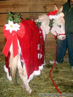 Christmas Costume For Donkey Is Done Pics My Horse Forum
