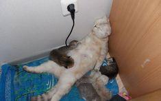 A mãe fica tão cansada que do jeito que tá, dorme.