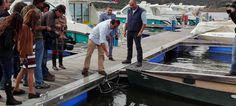 Ervideira submerge 30.000 garrafas na Albufeira de Alqueva