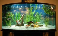 aquascape goldfish - Google Search