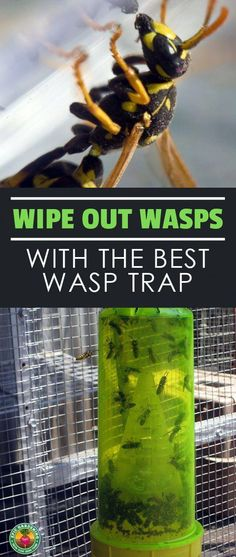 Urban Gardening Are you having a war with wasps? If you've got wasp problems, I'll show you how to pick the best wasp trap for your specific situation! Garden Bugs, Garden Pests, Garden Insects, Bug Control, Pest Control, Lily Beetle, Wasp Traps, Wasp Trap Diy, Gardens