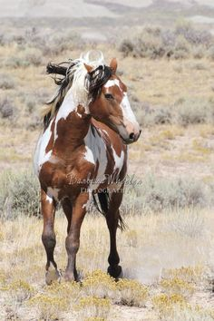 wild horse hindu singles A television news helicopter operator captured the dramatic images of wild horses stampeding in the arizona desert, friday the horses were running in the gila river indian reservation.