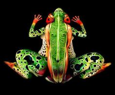 NSFW: Amphibian Body Painting NSFW: Amphibian Body Painting How many people do you see in this image? In this body paint illusion, five nudes morph into a brightly-colored frog. Art Conceptual, Amazing Frog, Amazing Body, Gorgeous Body, Beautiful, Human Body Art, Human Eye, Illusion Art, Illusion Pictures