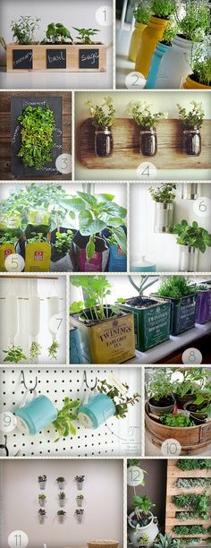 More Design Please - MoreDesignPlease - Indoor Herb Gardens