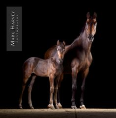 Family Portrait by Mark Harvey  Fine Art Equine Portrait, Mother and Foal, Relationships, Fine Art, Photography, Uk Horse Photographer, Refined Equine Portraiture.