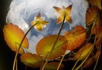 Kasvit Pekka Tuuri Kohti valoa