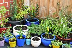 my patch of pots