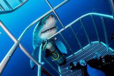 Turistas obtienen terroríficas fotos de tiburón gigante tras inesperado acercamiento en México