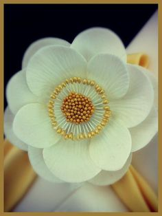 sugar anemone flowers by Inspired by Michelle Cake Designs