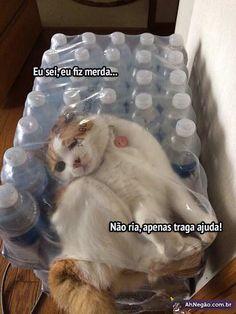 Gato x Embalagem de Garrafas de Água