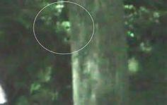 Unexplained Trail Cam - Bing images