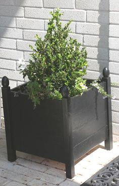 Planter DIY-green shrub with a black planter. Very cute.