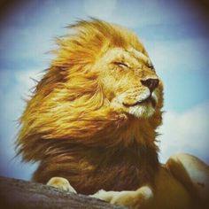I am.... a LEO, and proud!