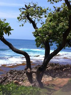Turtle Bay Hawaii, Places Ive Been, Spaces, World, Beach, Water, Travel, Outdoor, Beautiful