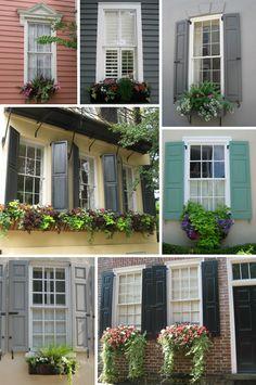 Charleston's Window Boxes – design finch