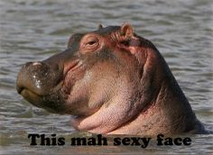 This mah sexy face - Funny hippo makes sexy face.