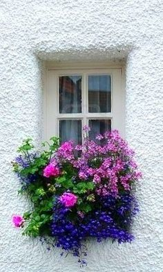 Beautiful window box...  Beautiful colors against the white stucco make this arrangement pop!