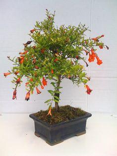Miniature Trees