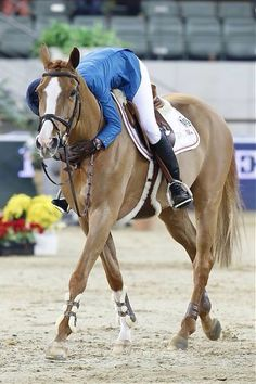 The most important role of equestrian clothing is for security Although horses can be trained they can be unforeseeable when provoked. Riders are susceptible while riding and handling horses, espec… Cute Horses, Pretty Horses, Horse Love, Equestrian Outfits, Equestrian Style, Chestnut Horse, Show Jumping, Horse Girl, Horse Pictures