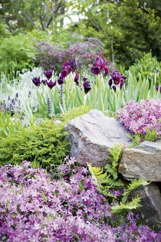 rock garden - creeping phlox and iris Purple Garden, Colorful Garden, Shade Garden, Garden Plants, Tropical Garden, Vegetable Garden, Amazing Gardens, Beautiful Gardens, Beautiful Flowers