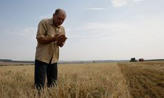 UN warns of rising food costs after year's extreme weather: Warning comes as shops struggle to fill shelves and UK farmers' union reports wheat yields are at lowest level since 1980s. Russia and the USA's yields have also been badly affected by drought.