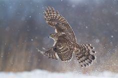 Znalezione obrazy dla zapytania ptak ma łapy czy nogi?