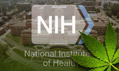 http://www.tsu.co/rem3600 NIH Turns To Cannabinoids For Possible Cancer Treatment http://www.medicaljane.com/2015/03/11/why-the-nih-may-be-investigating-cannabinoids-for-possible-cancer-treatment/