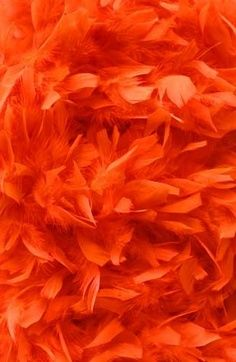 Delicate and fluffy feathers Orange | Orange Feathers