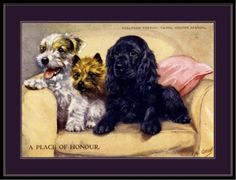 Originally printed in the early Sealyham Terrier, Terrier Dogs, Cairn Terriers, Cairns, Dog Artwork, Poster Art, English, Cover Pics, Print Pictures
