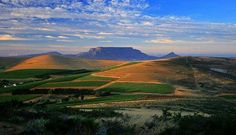 Discover the Durbanville Wine Valley Table Mountain, Mountain Landscape, Cape Town, Wonders Of The World, South Africa, Golf Courses, Journey, Wine, Mountains