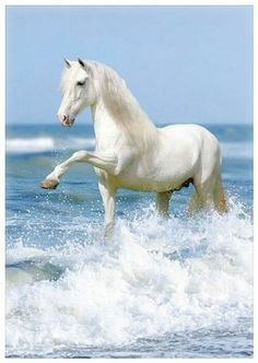 Image result for white horse on beach