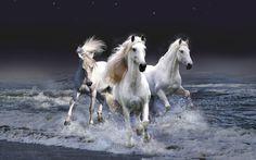 Latest Horse Pics