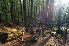 Bella wandering Avatar Grove near Port Renfrew Vancouver Island, Avatar, Canada, Explore, Adventure, Travel, Beautiful, Viajes, Destinations