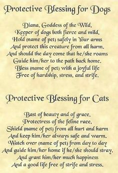 Blessings for dogs and cats