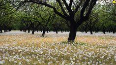 viewes-meadow-trees-dandelions-orchard.jpg (3840×2160)
