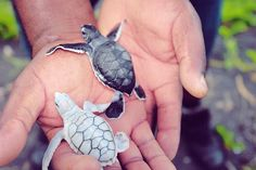 Baby turtles <3