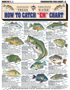 How to Identify Freshwater species Shad Perch Walleye Bluegill Crappie Trout and Bass - The Best Charts For Freshwater Fishing Identification Knot Tying and Catching Fish Fishing Rigs, Bass Fishing Tips, Gone Fishing, Best Fishing, Fishing Games, Fishing Stuff, Fishing Basics, Fishing Tackle, Walleye Fishing