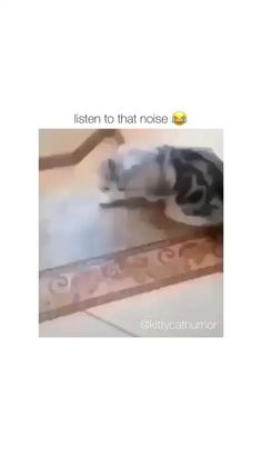 Funny Animal Jokes, Funny Animal Videos, Cute Funny Animals, Funny Animal Pictures, Animal Memes, Funny Cute, Funny Dogs, Cute Cats, Hilarious