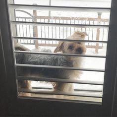 Meus pais sempre me ensinaram a guardar os brinquedos depois que acabar de brincar... E já que ela gosta tanto da janela guardei horrores :) #instadog #dog #snow