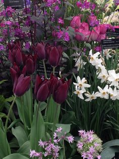 Great planting combinations from Avon bulbs