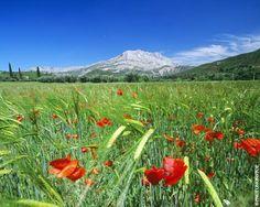 Montagne Sainte Victoire, Provence