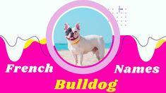 Police Dog Names, Police Dogs, French Bulldog Names, French Names, Cute Names For Dogs, Cute Dogs, Puppy Names, Pet Names, Popular Male Dog Names