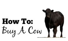 One of the best ways to save money on meat is to buy a whole cow.  It sounds crazy, but it's not as hard as it seems.