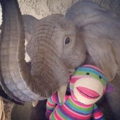 Pier 1 Rainbow Sock Monkey is keen on meeting other animals, real or not