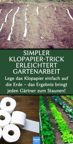 Simpler Klopapier-Trick erleichtert Gartenarbeit Simple toilet paper trick makes gardening easier. Just put the toilet paper on the ground - the resul Multiplication Végétative, Indoor Garden, Indoor Plants, Seed Tape, Jardin Decor, Bedroom Murals, Planting Roses, Seed Starting, Diy Garden Decor