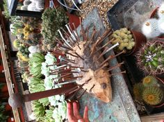Drift wood and rusty nail hedgehog. Thinking this might be something to do with the rusty old nails from our kitchen renovation. Hunny Bunny, Woodworking Projects For Kids, Scrap Metal Art, Drift Wood, Recycled Art, Wooden Pallets, Old Wood, Art Club, Diy Nails