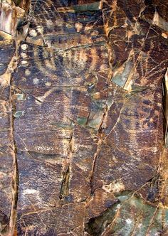 Tamgaly Gorge ancient rock carvings, Kazakhstan photo 14