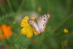 Los ojos de la mariposa