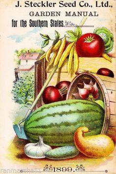 1899 Stckler Vintage Fruit Vegetable Seed Packet Catalogue Advertisement Poster   eBay